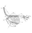 axial skeleton vintage vector image vector image