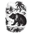 european bear vintage vector image vector image