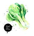 watercolor hand drawn bok choy vegetables vector image vector image