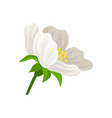 flat icon of cute flower with white petals vector image vector image