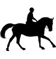 horse riding silhouette vector image vector image