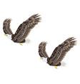 stylized bald eagle vector image vector image