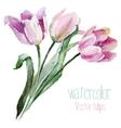 Tulip set vector image