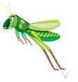 a green grasshopper on white background vector image vector image