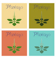 assembly flat healthy plant plantago vector image