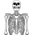 draw in black and white human skeleton on white vector image vector image