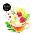 watercolor color pencil hand drawn herbal tea vector image vector image