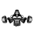 black and white of a gorilla with barbell vector image vector image
