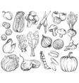 collection of hand-drawn vegetables black and vector image vector image