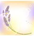 Purple Lavender Flower Colorful Background vector image