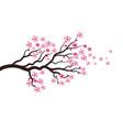 sakura beauty flower icon vector image