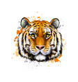 tiger head portrait from a splash watercolor vector image vector image