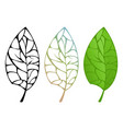 tree leaf isolated vector image