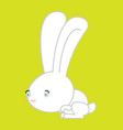 white rabbit isolated cute hare bunny animal vector image vector image