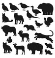 bear duck buffalo wolf panther fox silhouette vector image