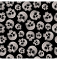 human skulls on a black background vector image vector image