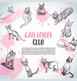 background with cat breeds cats lovers club vector image vector image