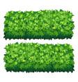 garden bush isolated shrub hedge green vector image vector image