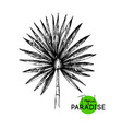 hand drawn sketch tropical paradise palm leaf vector image vector image