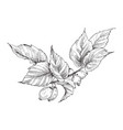 hip rose buds berry and branches vintage vector image vector image
