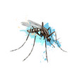 mosquito from a splash watercolor colored vector image vector image