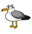 sad pigeon on white background vector image