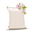 scroll blank paper with blossoming cherry branch vector image vector image