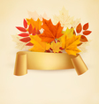 Autumn banner background with colorful leaves vector image