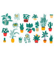 house plants tropical and desert flowers in vector image