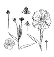 set of drawn with ink daisies flowers vector image vector image