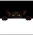 black oriental cat holding white paper banner vector image vector image