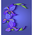Iris frame vector image vector image