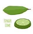 tropical finger lime cartoon flat style vector image vector image