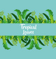 tropical leaves decoration vector image vector image