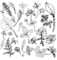 Set of ink drawing leaves vector image vector image