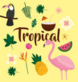 tropical fruit flower vector image vector image