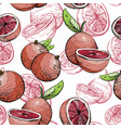 citrus seamless pattern with grapefruit vector image vector image