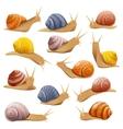 Decorative Snails Set vector image vector image