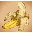 engraving banana retro vector image vector image