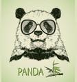 hand drawn portrait panda bear with glasses vector image