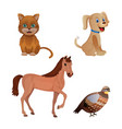 set different animal isolated on white vector image vector image