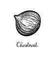 ink sketch chestnut vector image