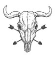 vintage skull buffalo with crossed arrows vector image