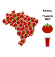 brazil map collage of tomato vector image vector image