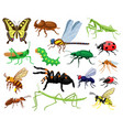 cartoon insects butterfly beetle spider vector image vector image