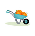 Metal wheelbarrow with two big pumpkins garden vector image