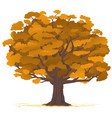oak tree in autumn isolated vector image vector image