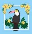 tropical exotic toucan bird on tree branch flowers vector image