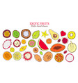 colored sketch natural exotic products collection vector image vector image