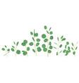 silver dollar eucalyptus selection branches vector image vector image